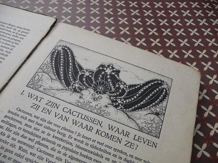 'cactussen' uit 1931, door A.J. van Laren 2