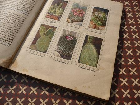 'cactussen' uit 1931, door A.J. van Laren 4