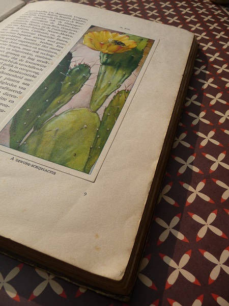 'cactussen' uit 1931, door A.J. van Laren 5